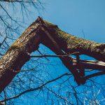 שבור ורועד | שיר שורר
